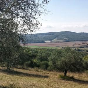 Villa-Antria-Olive-tree-adoption-(4)