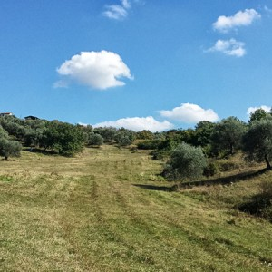 Villa-Antria-Olive-tree-adoption-(8)