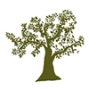 Adopt a tree in an olive grove