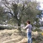 cresta-verde-olive-tree-adoption-(10)