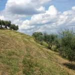 cresta-verde-olive-tree-adoption-(1)