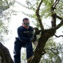 paoletti-trees-pruning